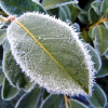 Do you know the frost dates for your area?