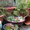 Is planting a garden on your rooftop safe?